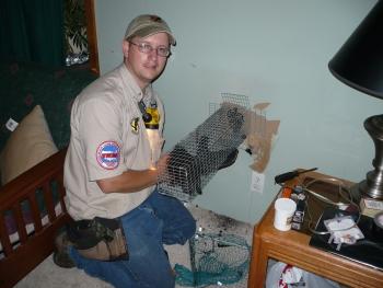 Rockford Mi Squirrel Removal In Wall